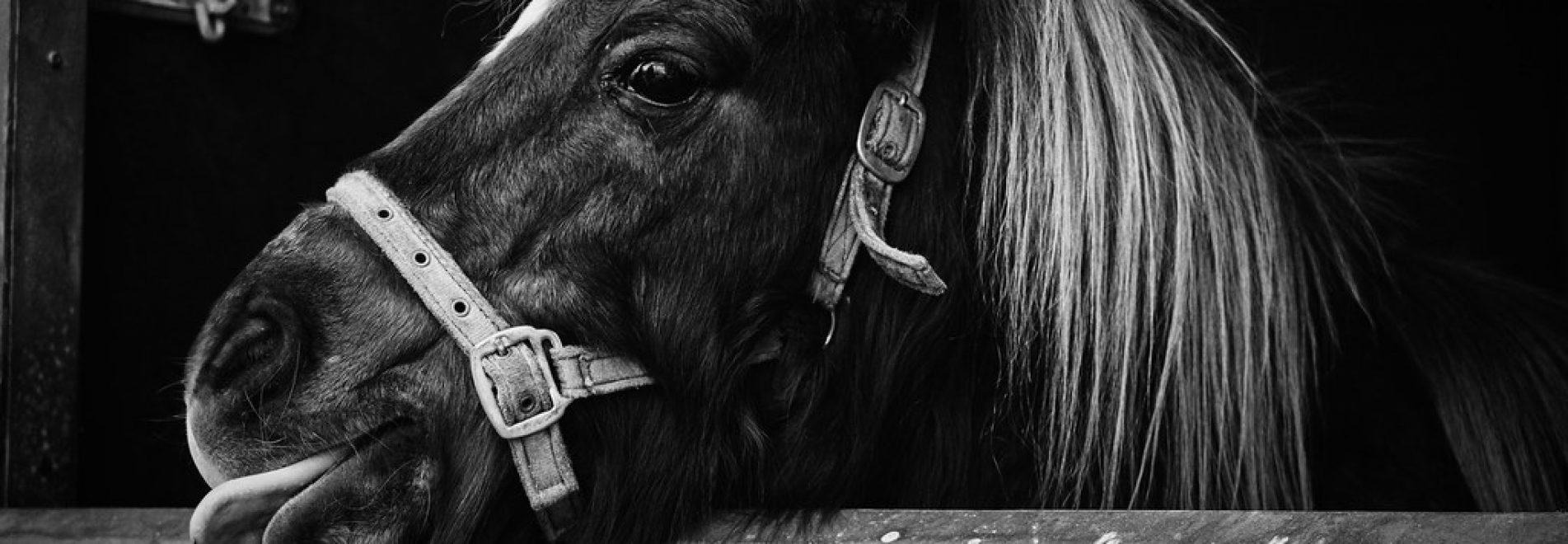The Cheeky Pony Tack Shop